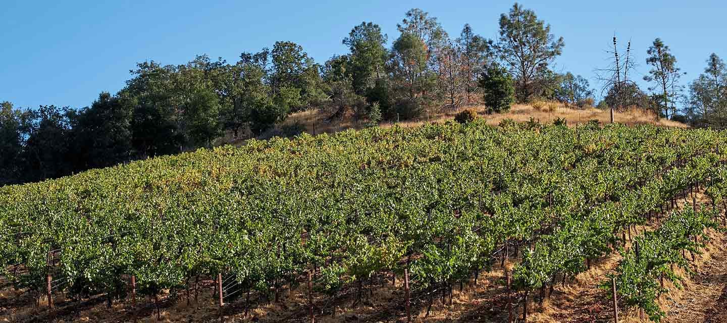 Calera Young Chardonnay Feature Image