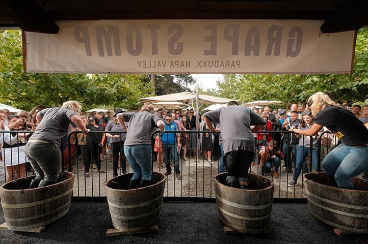 Napa Valley fall annual grape stomp competition and concert at Paraduxx