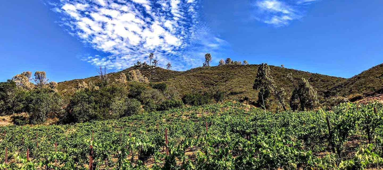 Calera Selleck Vineyard Feature Image